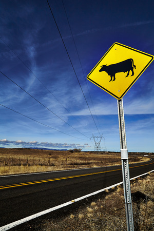 blacktop: Cattle Crossing Road Sign in Rural America