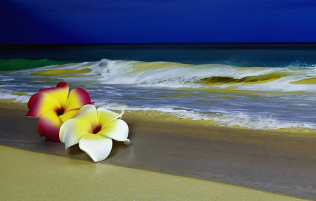 shorebreak: A pink and white Plumeria Hawaiian Flowers laying on sand with waves in background and shallow depth of field