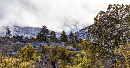 mountainous: Mountainous wilderness area with pine trees and snow covered ground