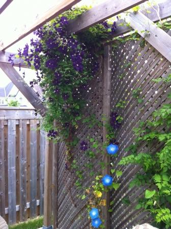 Onze achtertuin pergola biedt een plaats van stille eenzaamheid