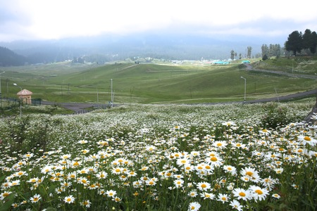 plateau of flowers: India Travel