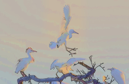roosting: Digital ink drawing of white birds (cattle egrets) leaving the top of their roosting tree at very first light.  The soft pastel colours make this suitable for a background