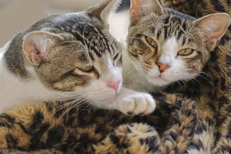 highkey: Two young sibling cats lying together on a soft rug in the sun Stock Photo