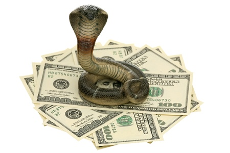 Cobra and US dollars on a white background  Stock Photo