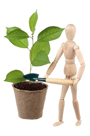 Wooden dummy and cherry sapling isolated on white background photo