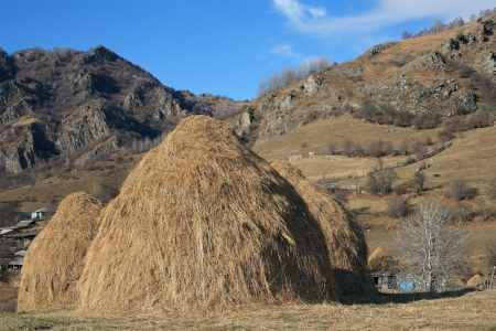 Hay stacks in the late of autumn  Stock Photo