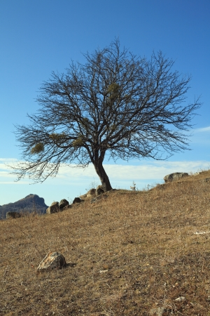 Beautiful view of the tree in the late of autumn