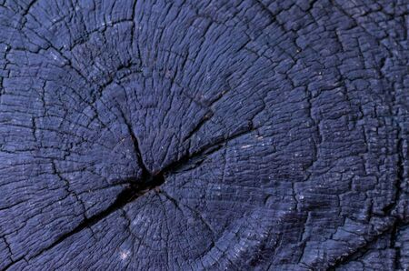 top view macro photography of flat wooden texture with rings in the trunk. age concept