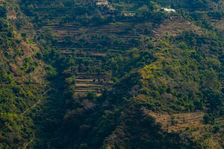 beautiful photography of terrace type crop field on mounatin with trees, agricultural concept
