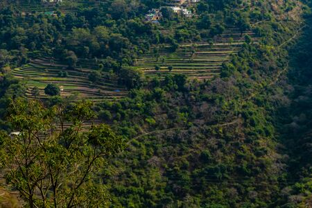 high angle shot of beautiful farms on mountains and tree in the foreground