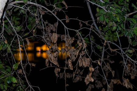 Flash photography of tree branch in foreground and blurred Jal Mahal Palace with beautiful lighting in the background