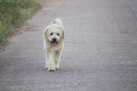 walking alone: Perro caminando solo