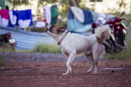 perro furioso: Ladrido de un perro enojado