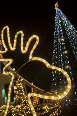 chatfield: Reindeer Light and Christmas tree Lights