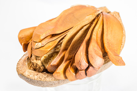 mahogany: Open peel show inside of mahogany seeds on a white background. Stock Photo