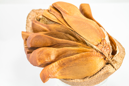 tannins: Open peel show inside of mahogany seeds on a white background. Stock Photo