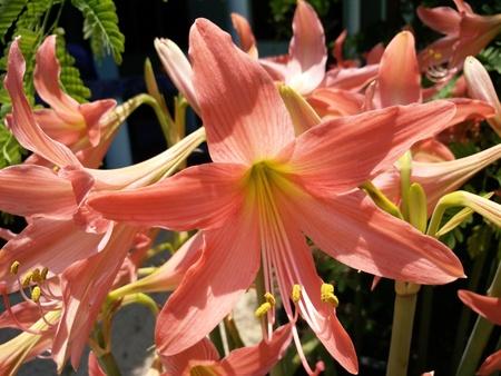 Beautiful sweet flower natural lifestyle Thailand Stock Photo