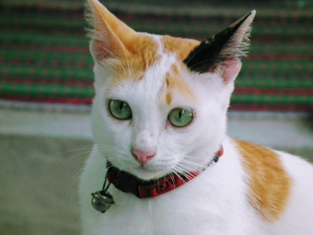 Looking for you. Lovely cat lifestyle animals