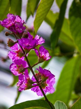 detail: Beautiful single flower naturally