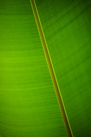Under a banana leaf Stock Photo