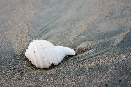 A shell on beach in southern of Thailand photo
