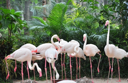 A group of flamingo in the open zoo  photo
