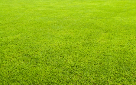 The beautiful green grass field background with nobody  photo