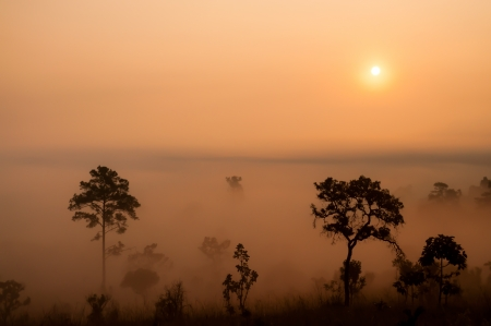Sunrise over the misty forest photo