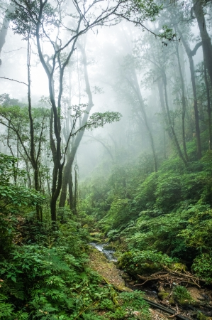 jungle background: The beautiful scene of tropical rain forest at Doi Inthanon National Park, Thailand  Stock Photo