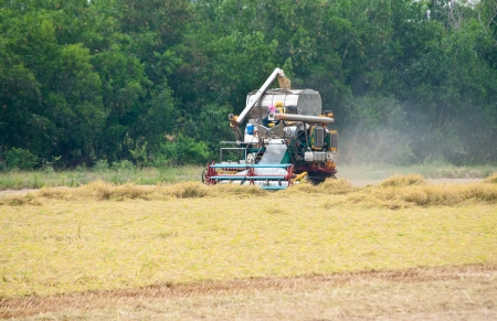 A rice harvest truck is harvesting the rice field  photo