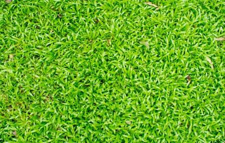 The beautiful green grass field background photo
