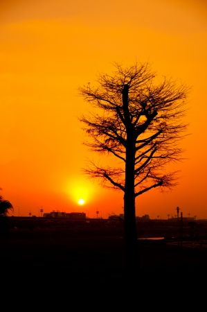 The beautiful scene of sunset with silhouette tree Stock Photo