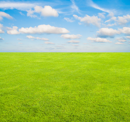 The green grass field with blue sky and cloud