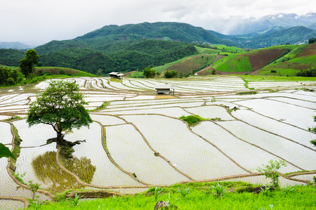 The beautiful scene of rice terraces in Chiang Mai, Thailand