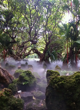 The beautiful tropical garden with fog Stock Photo