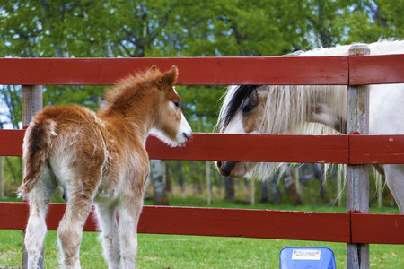 Foal meets a friend