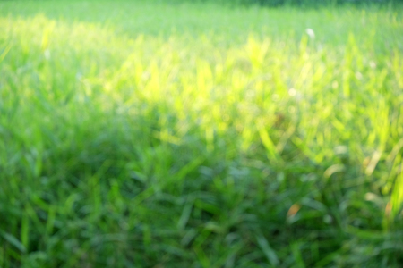 spotted ray: Natural abstract soft green sunny background with grass Stock Photo