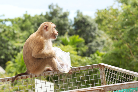 monkey sitting and playing plastic bag Stock Photo