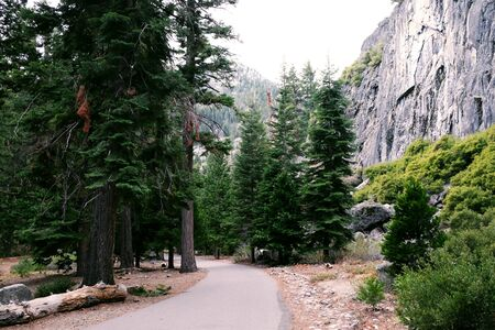 A road through beautiful pine tree forest landscape background in national park Standard-Bild