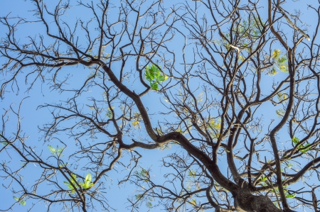 Branches of tree against clear blue sky
