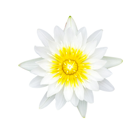 White waterlily or lotus flower isolated on white background, with clipping path. photo