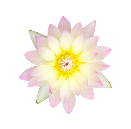 Pink waterlily or lotus flower isolate on white background, with clipping path. photo