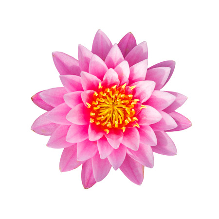 Pink waterlily or lotus flower isolated on white background, with clipping path. Reklamní fotografie