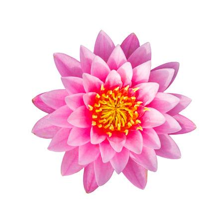 Roze waterlelie of lotus bloem op een witte achtergrond, met het knippen van weg. Stockfoto