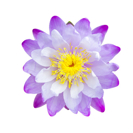 Purple lotus flower isolated, with clipping path. Imagens