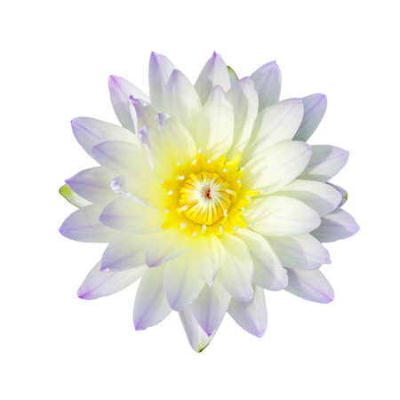 Purple lotus flower isolated, with clipping path. photo