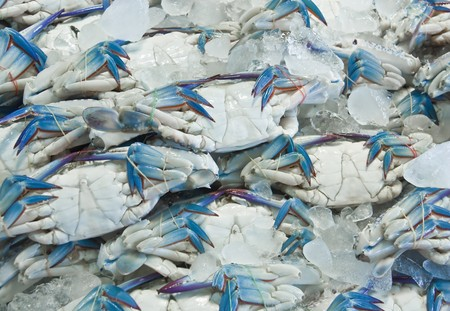 fresh crabs photo