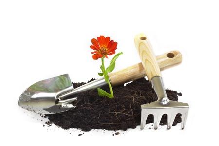 home gardening Stock Photo - 9122228