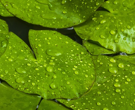 water drops on green leaf background photo
