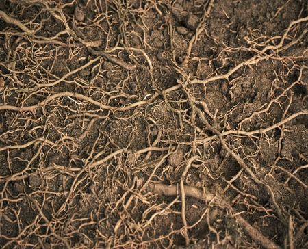 close up roots with fertile soil background Stock Photo